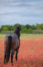 Horse Running In Wild Flowers