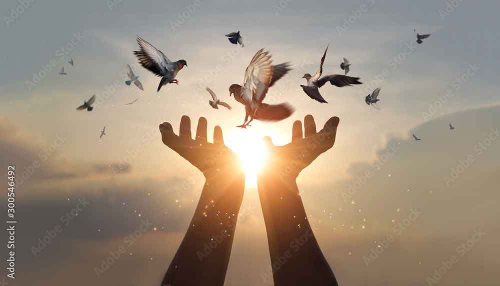Fototapeta Woman hands praying and free bird enjoying nature on sunset background, hope and faith concept