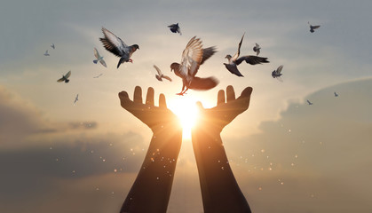 Woman hands praying and free bird enjoying nature on sunset background, hope and faith concept