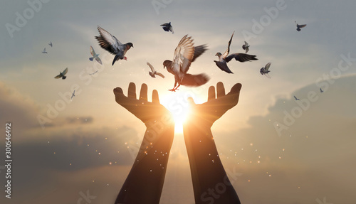 Foto Woman hands praying and free bird enjoying nature on sunset background, hope and