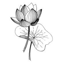 Vector Lotus Floral Botanical ...
