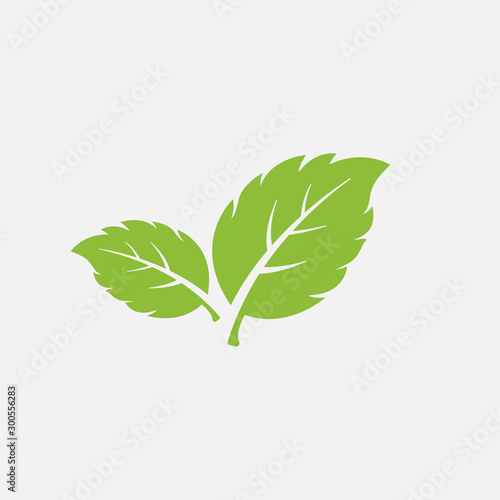 Obraz mint leaf element vector icon. green mint leaves vector symbol - fototapety do salonu