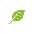 nature green leaf element vector icon. green leaves vector symbol