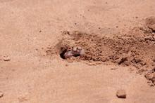 Up Close Shot Of A Little Sand...