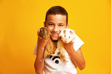 Optimistic Boy Smiling And Looking At Camera While Carrying Adorable Guinea Pigs Against Yellow Background