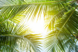 Fototapeta  - tropical palm leaf background, coconut palm trees perspective view