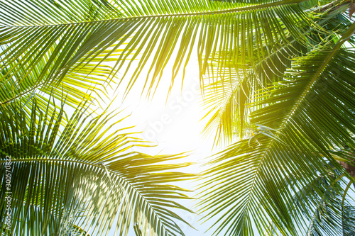 tropical palm leaf background, coconut palm trees perspective view Wallpaper Mural