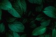 Leinwandbild Motiv  closeup tropical green leaves texture and dark tone process, abstract nature pattern background