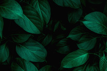 Tropical Leaves Texture, Abstr...