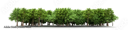 Green trees isolated on white background Forest and foliage in summer 3d render Fototapet