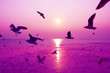 Beautiful nature landscape sunset and birds on the beach.