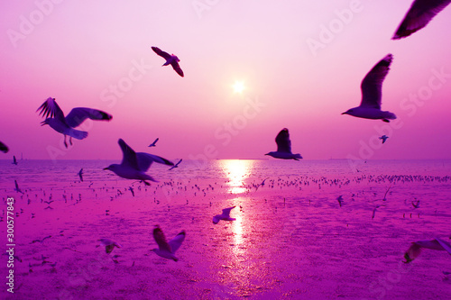 Photo sur Toile Mer coucher du soleil Beautiful nature landscape sunset and birds on the beach.