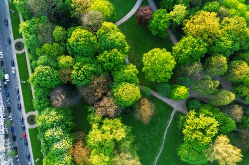 Luftaufnahme Hofgarten Düsseldorf, Park