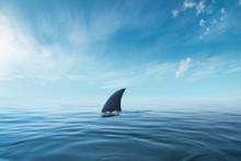 Shark Fin On Surface Of Ocean ...