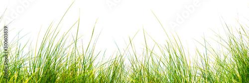Obraz freigestellte grashalme auf weißem hintergrund - fototapety do salonu