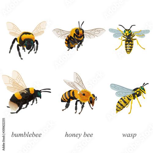 Six poses of bumblebees, bees and wasp insects Tapéta, Fotótapéta