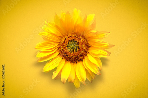 Flower card of sunflower on vivd yellow background. Flat lay, top view, copy space. Autumn or summer Concept of harvest time or agriculture. Sunflower natural background.