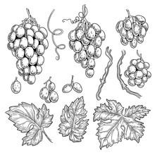 Grape Doodle. Wine Symbols For Restaurant Menu Graphics Engraving Grape Leaves Vector Hand Drawn Collection. Grape Vine For Vintage Restaurant Menu Illustration