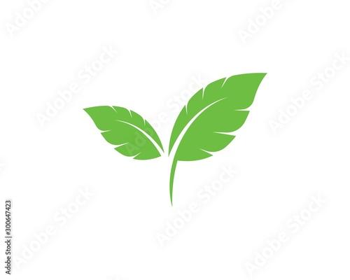 Fototapeta Logos of green leaf ecology nature element vector obraz na płótnie