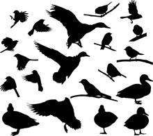 Nineteen Isolated Black Birds