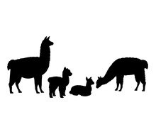 Alpaca Lama Family. Silhouette...