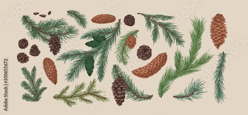 Pinturas sobre lienzo  Hand drawn colorful collection of spruce branches and cones