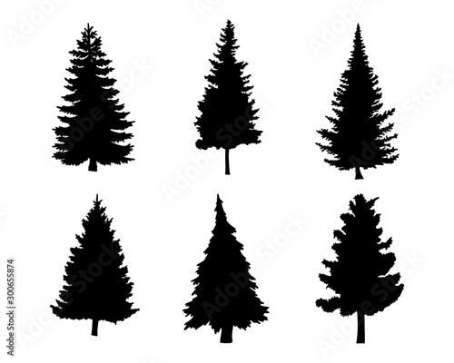 Photo  Isolated tree on the white background
