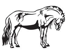 Vector Standing Horse 2