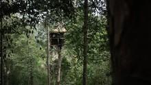 Slomo Revealing A Large Jungle...