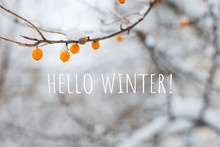 Frozen Sea Buckthorn Berries O...