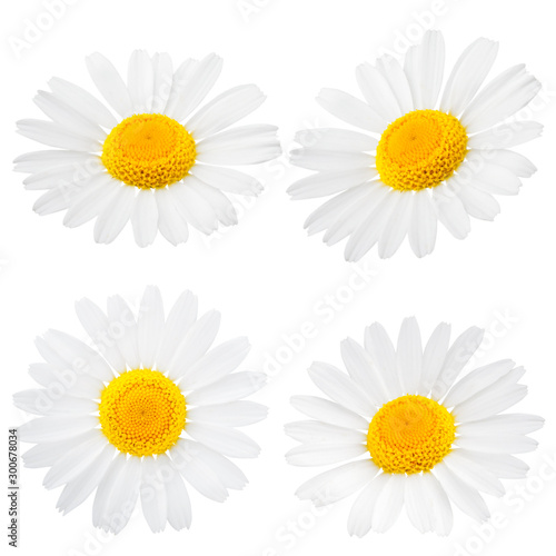 Fond de hotte en verre imprimé Marguerites Chamomile or camomile flowers isolated on white background