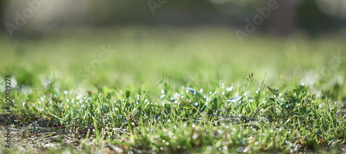 Spoed Foto op Canvas Natuur Fresh morning dew on spring grass, natural background - close up. The background in the blur.