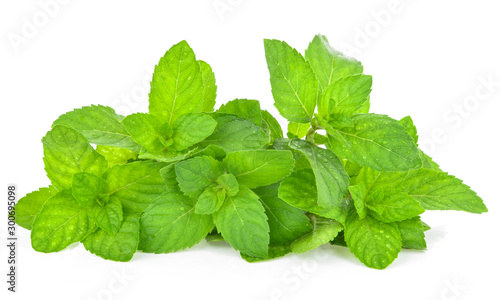 Obraz Fresh mint leafs isolated on a white background - fototapety do salonu