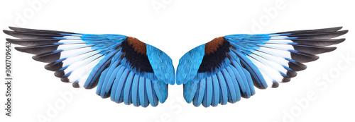 Leinwand Poster  Blue winged bird isolated on white background