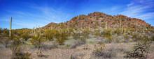 Various Cacti In Organ Pipe Cactus National Monument, Arizona