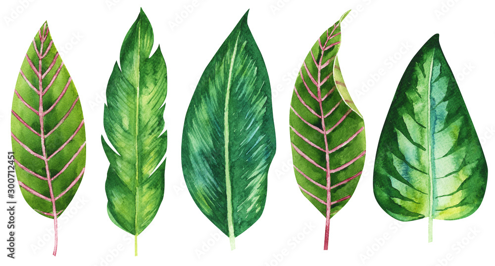 Fototapety, obrazy: Tropical, exotic set of green hand drawn watercolor leaves. Isolated illustration on a jungle theme, unusual plants on a white background. textile design, packaging, print, invitation, wallpaper.