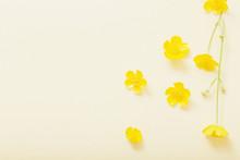 Yellow Buttercups On Yellow Pa...