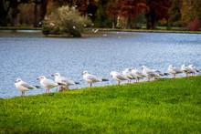Birds In Chantilly Domain, France