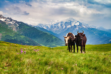 Two Grazing Cows On A Field In...