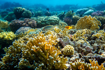 bunter Korallengarten