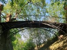 Bridge In Forest Landscape