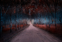 Pathway To The Mysterious Fore...
