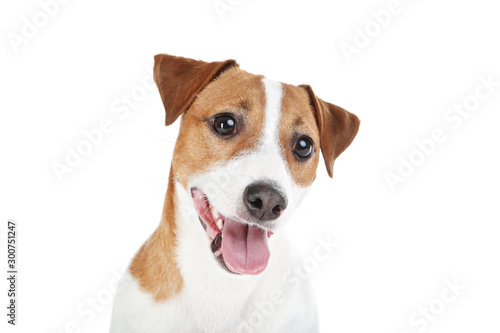 Carta da parati Beautiful Jack Russell Terrier dog isolated on white background