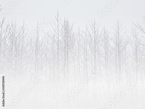 Tło zima - fototapety na wymiar