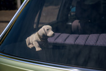 Bobblehead Dachshund, In German Wackeldackel, On The Parcel Shelf In The Car, A Popular Accessory In The 1970s, Copy Space, Selected Focus,