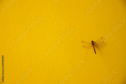 Foto auf Leinwand Schmetterlinge im Grunge Beautiful butterfly on yellow cement wall, spring concept background