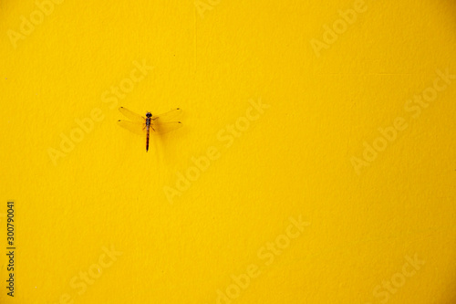 Fotobehang Vlinders in Grunge Beautiful dragonfly on yellow cement wall, spring concept background