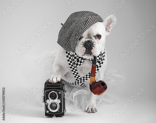 Foto auf Leinwand Französisch bulldog White French Buldog a photographer posing with camera dressed as an artist wearing baret bow tie suspenders tutu,smoking pipe with paw on the camera.
