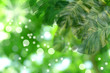 Blur green leaves pattern for summer or spring season concept,leaf with bokeh textured background