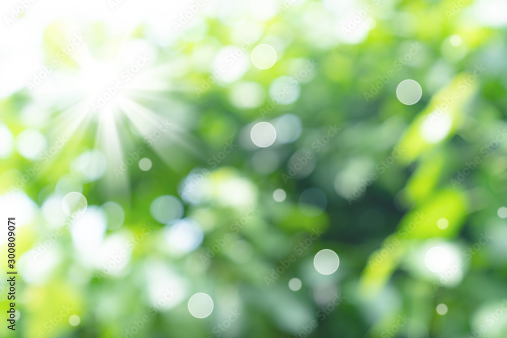 Fototapety, obrazy: natural green bokeh abstract background,blurred textured